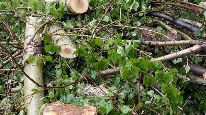 «Куча спиленных деревьев»: челябинцы заметили в городе массовую вырубку