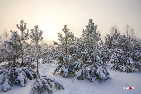Климат на территории области был похож на сибирский