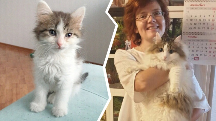 До слёз: как сейчас выглядят 10 брошенных котиков, которых забрали домой из приюта (фото до и после)