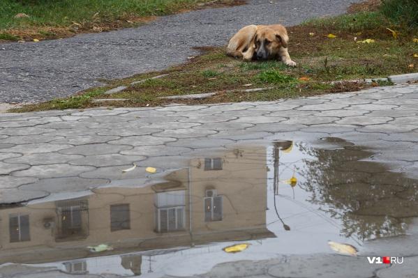 Бродячие собаки в Волгограде стали жертвами неизвестных охотников