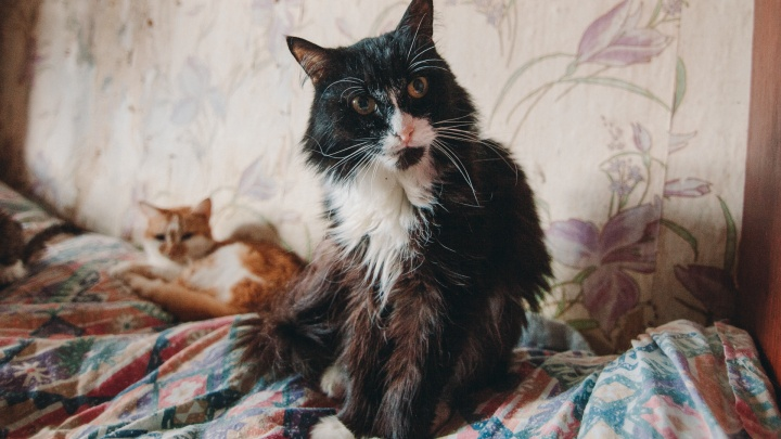 В Тюмени больше сотни кошек лечат от коронавируса. Рассказываем, опасен ли он для человека