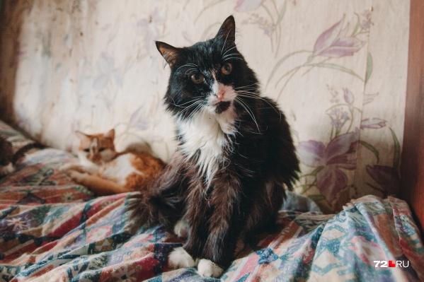 Коронавирус кошек поражает ЖКТ и опасен только для здоровых питомцев