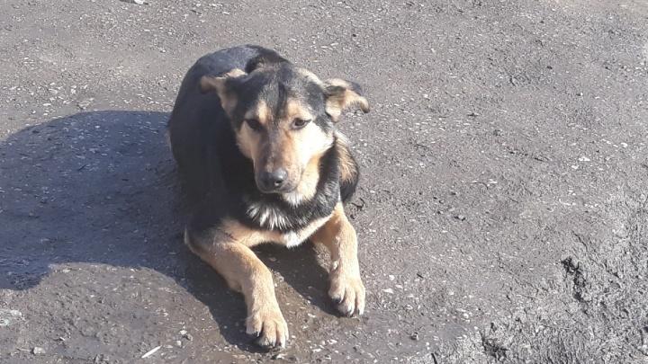 В Самарской области разрешили вынужденную эвтаназию бездомных животных