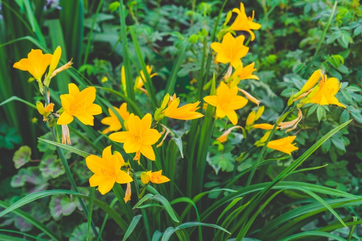 Вы вряд ли увидите в разных дворах одни и те же цветы