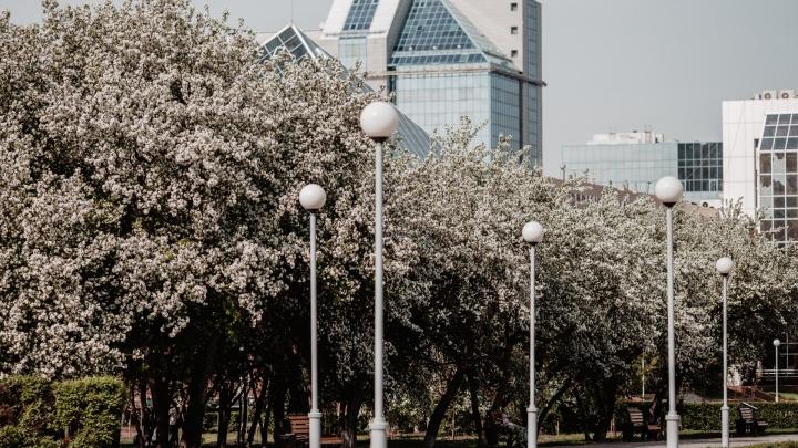 Полвека не было такой жары: Тюмень обновила температурный рекорд мая