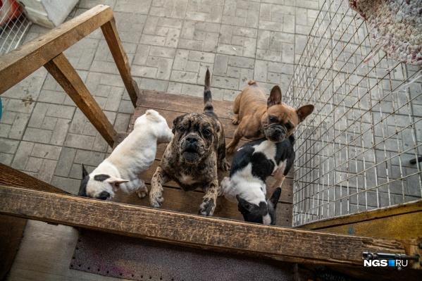 На улице 1-й переулок Порт-Артурский 30 лет работает собачий питомник — соседи хотят, чтобы владелица животных их убрала