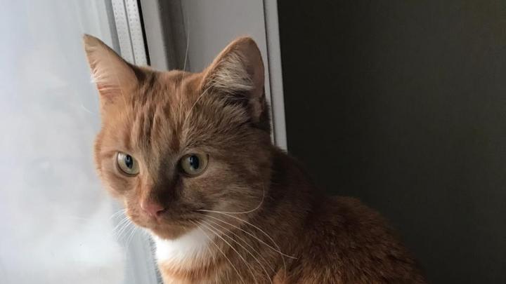 В голове застряла дробь: под Новосибирском пришлось усыпить подстреленного кота Сэма