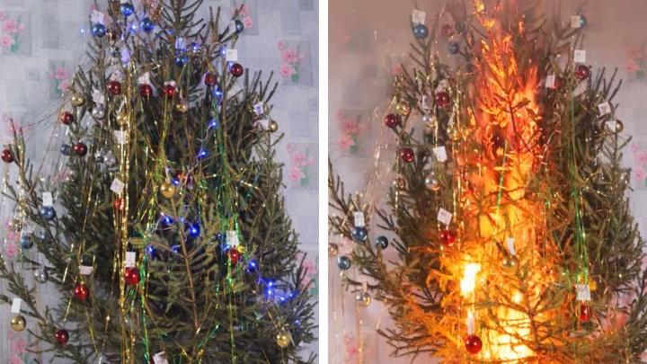 Красноярские пожарные подожгли искусственные и настоящую елки, чтобы наглядно показать скорость горения