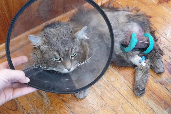 Кота назвали Тобиасом