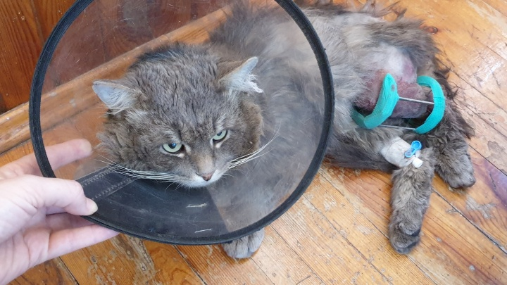 Живодёры в тюменском селе расстреляли кота