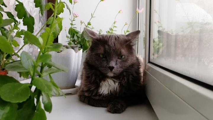 В Кузбассе будут судить мужчину, который выкинул кота с пятого этажа