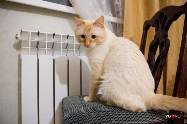 В садики, школы и больницы Ярославля отопление могут дать раньше положенного срока