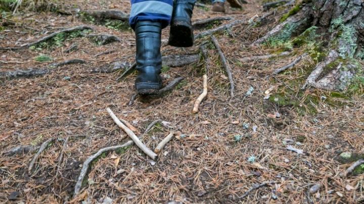 Волонтеры полночи искали в лесу четверых заблудившихся грибников