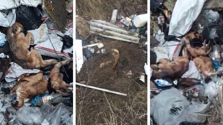 «В мешках тела животных»: жители нашли ямы с мертвыми собаками рядом с приютом в Минусинске