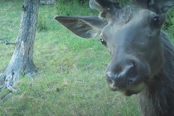 Видеотехника вызывает интерес у животных