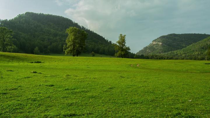 Альпийские луга в центре Башкирии: 14 фотографий с альтернативного места добычи сырья для БСК