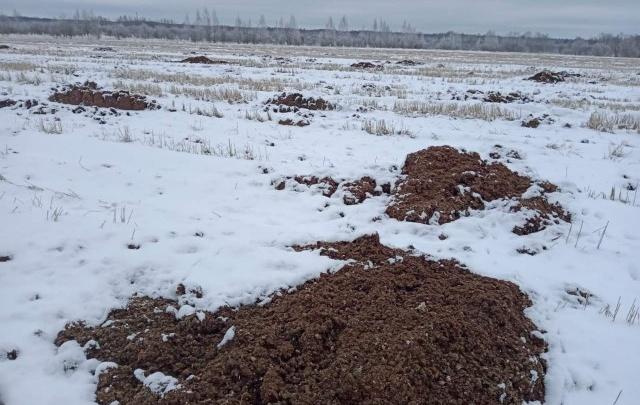 В Ярославской области берега двух рек завалили куриным пометом