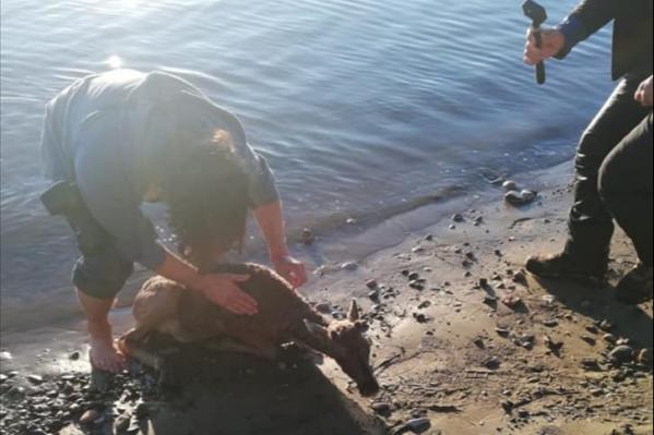 Жители находят раненых животных на берегу реки