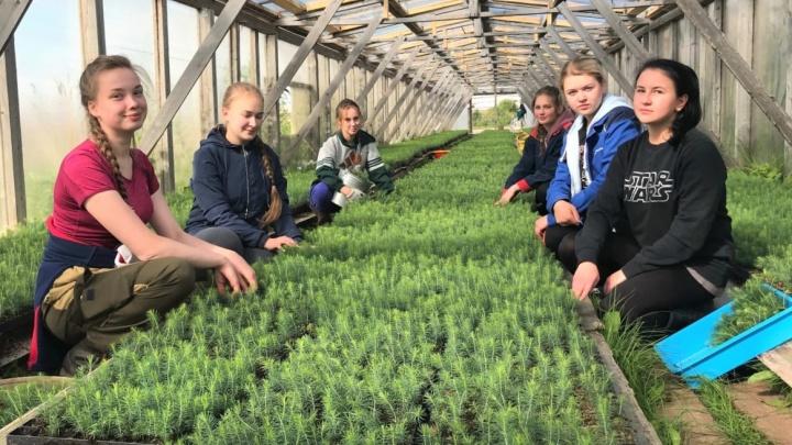 Любо-зелено: юные экологи ГК «Титан» победили на Всероссийском конкурсе «Лучший эковолонтерский отряд»