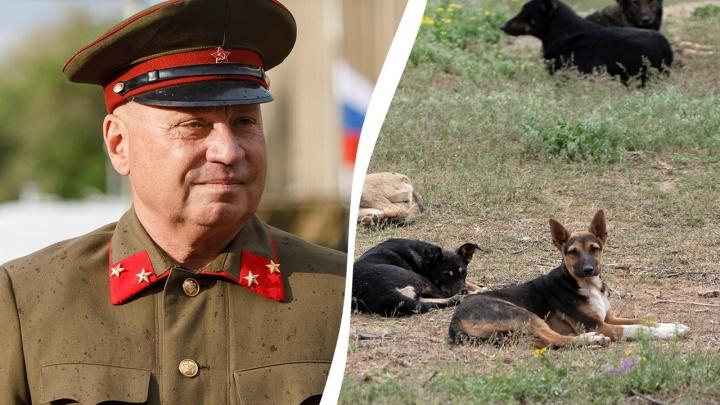Бездомные собаки Волгограда признаны нарушителями режима самоизоляции
