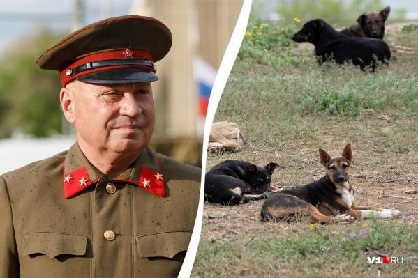С начала года, пришли к выводу в прокуратуре, Виталий Лихачев собак в Волгограде почти не ловил