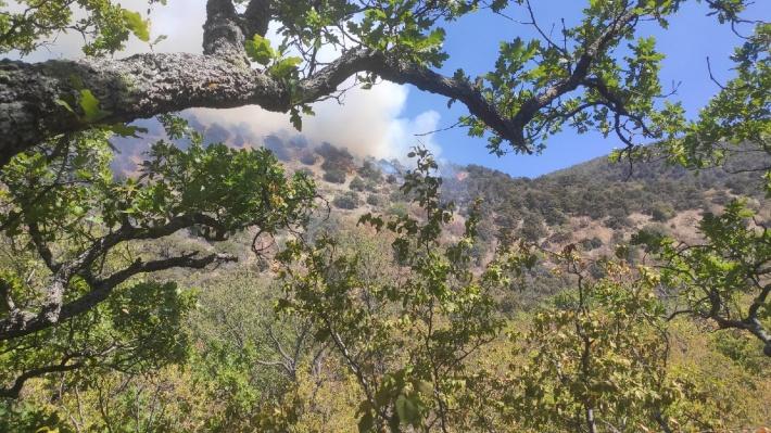 Столбы дыма можно увидеть за десятки километров