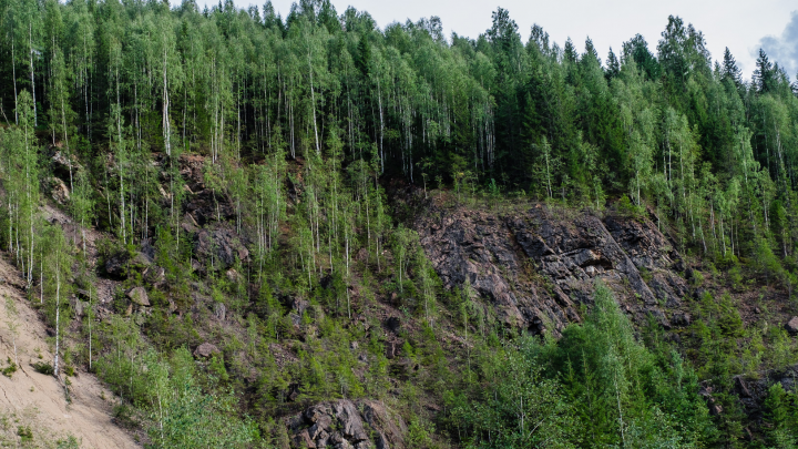 «Уже начали жечь свои вещи»: в Прикамье в лесу заблудились 4 женщины и 2 ребенка