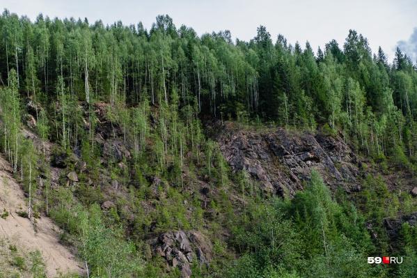 Березниковцы долго плутали в лесу