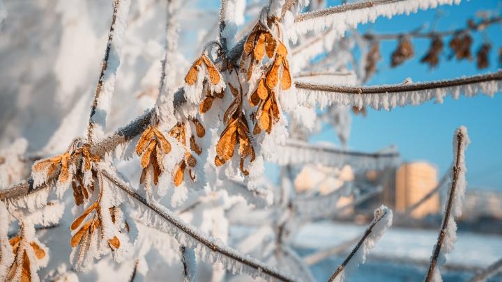 Морозы остаются: синоптики Кузбасса дали прогноз погоды на понедельник