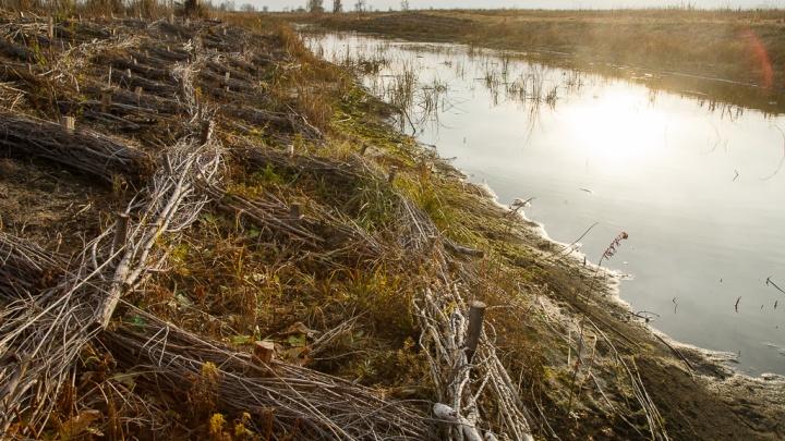 Осенние пикники отменяются: волгоградцам хотят запретить поездки в лес