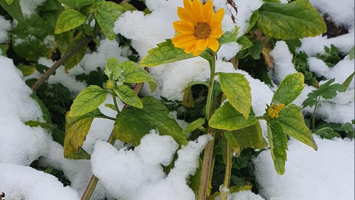 В Ярославле выпал первый снег: как это было. Уютный фоторепортаж