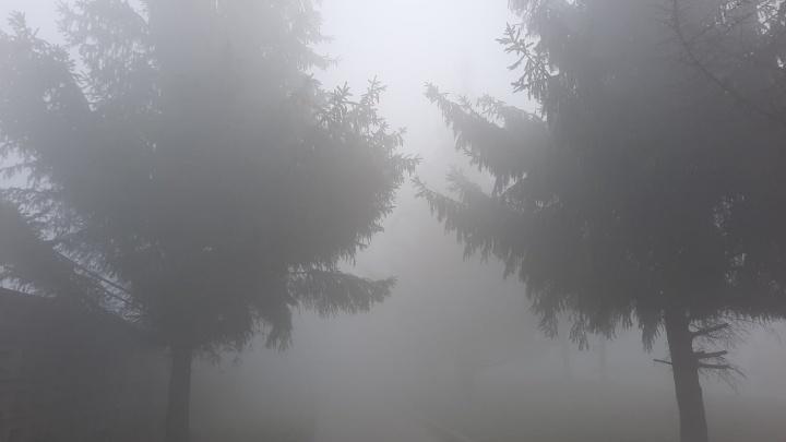«Нарушений не установлено». Прокуратура проверила хозяина дымящей свалки в Богородском районе