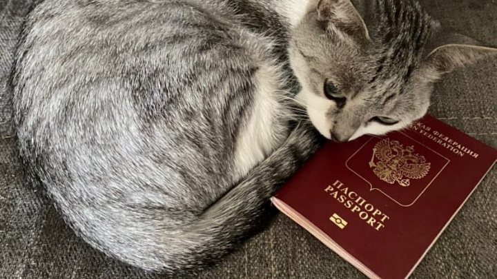 Количество выданных загранпаспортов в Ростовской области сократилось