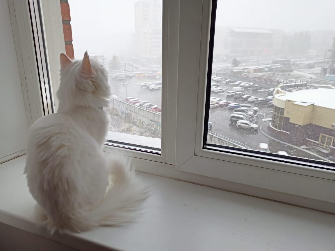 Видимо, котикам очень нравится наблюдать за снежной погодой из окна