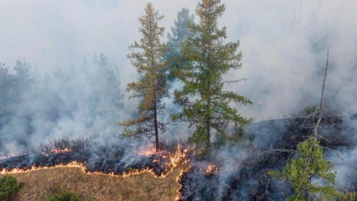 Пожары в Башкирском заповеднике продолжаются. Огнем охвачена территория в 1018 футбольных полей
