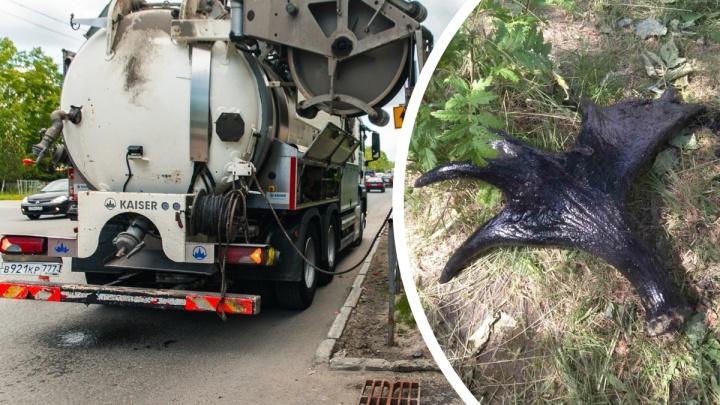 Жители окраины Тюмени выбросили в канализацию лосиные рога