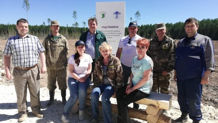 Скоро здесь будет лес: в Няндомском районе посадили 10 тысяч саженцев сосны
