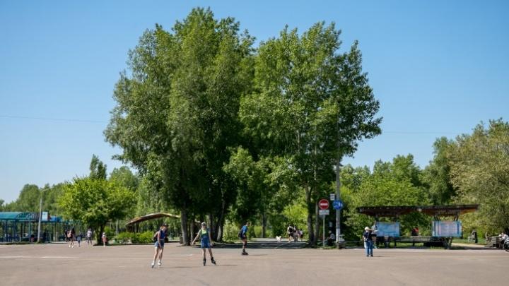Дожди сменит солнце: какая погода ждет Красноярск на неделе