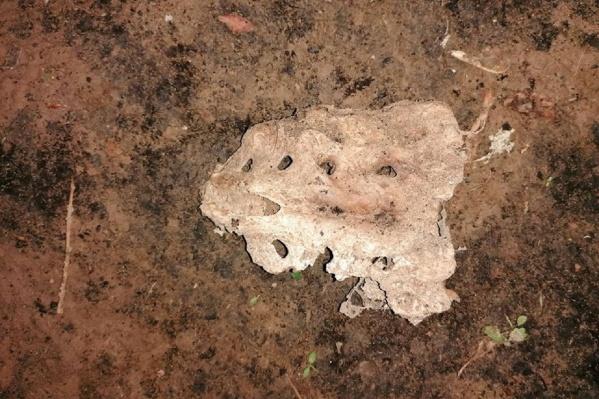 Эту кость нашли в сквере Свердлова