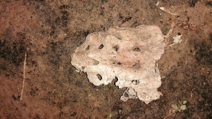 Пермячка нашла в сквере человеческие кости: следователи начали проверку