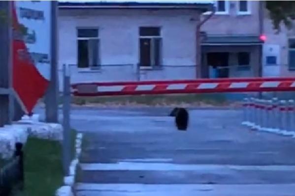 """Этим летом и осенью медведи будто <a href=""""https://www.e1.ru/news/spool/news_id-69474149.html"""" target=""""_blank"""" class=""""_"""">совсем перестали бояться людей</a>"""