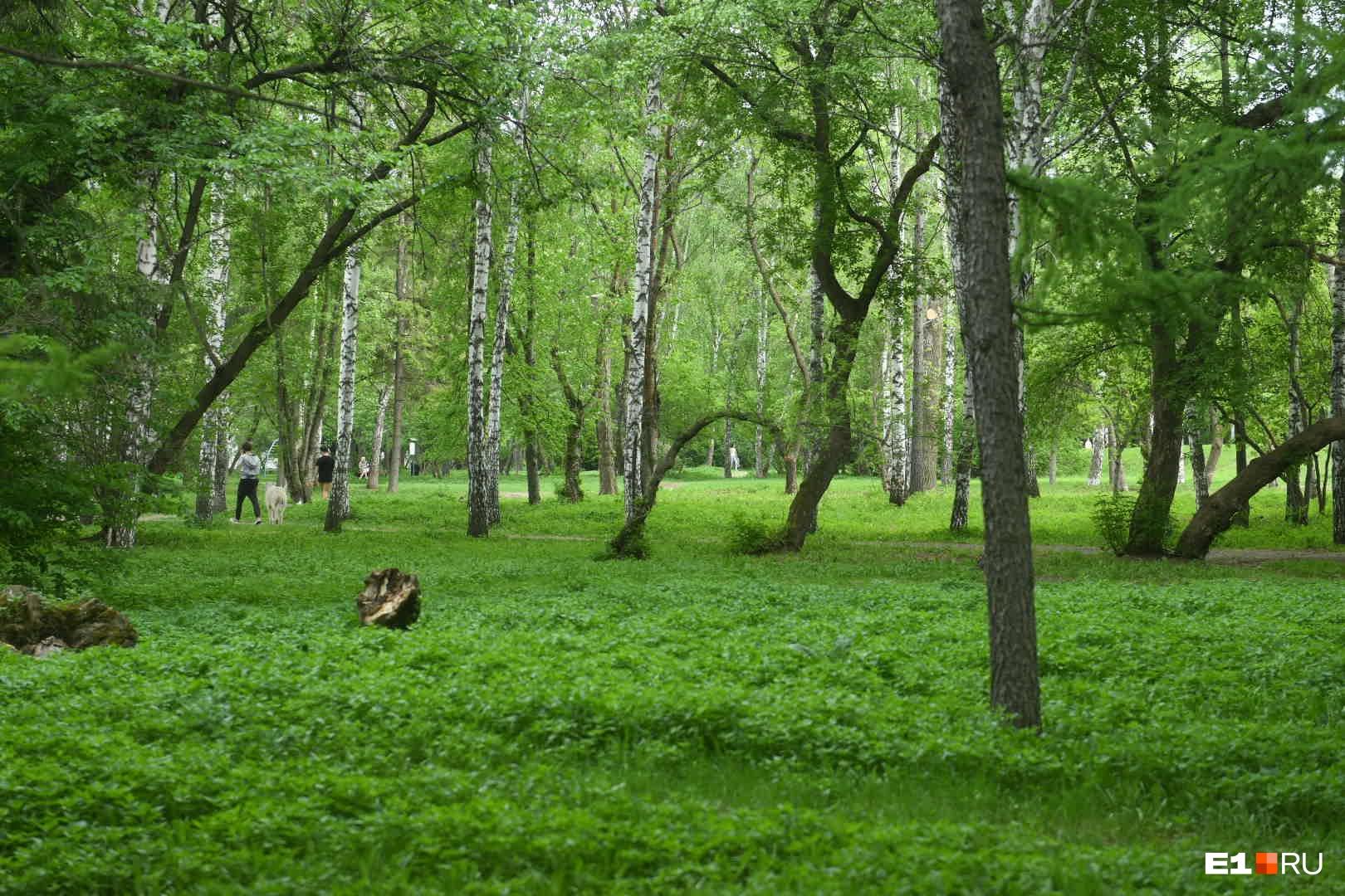 Парке XXII Партсъезда небольшой, но там очень много зелени