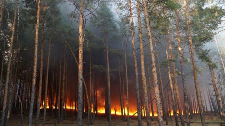 Площадь пожара в Тарасовском районе увеличилась до 1200 гектаров
