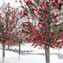 На деревьях Уфы «зацвели» розы в поддержку трансгендера на шоу «Холостяк»