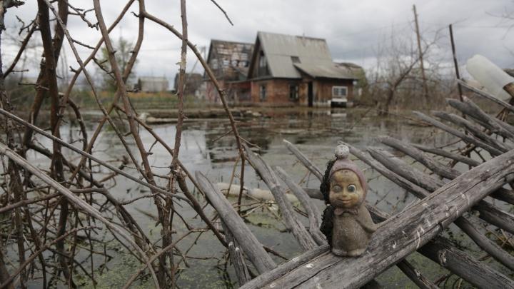 Омская Атлантида: дачный посёлок пять лет находится под водой и выглядит как кадры из «Ведьмака»