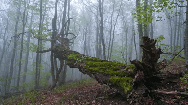 В Башкирии дерево насмерть задавило мужчину
