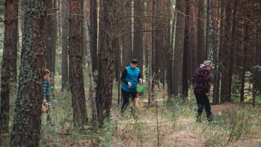 Бросают машины на обочине и с ведрами бегут в лес: что творится под Тюменью в разгар грибного сезона