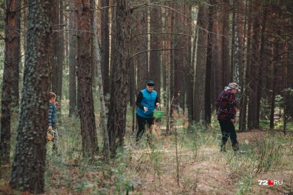 Целая семья выбралась в лес. Она ездит каждый год за грибами и никогда не покупает их у торговцев в городе