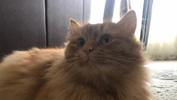 Горячая ночь обеспечена: уфимец за 2 миллиона рублей продает кота, который лечит импотенцию
