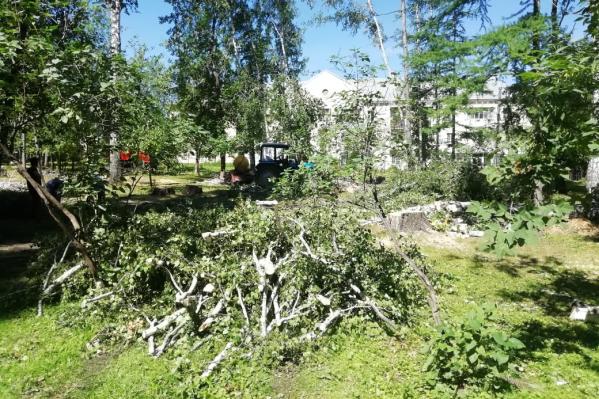 Всего в парке срубят 200 старых и больных деревьев, которые опасны для посетителей